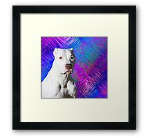 White American Pit Bull Terrier Dog Framed Print