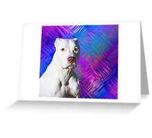 White American Pit Bull Terrier Dog Greeting Card