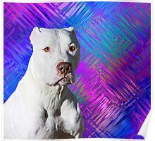 White American Pit Bull Terrier Dog Poster