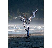 ephemeral Photographic Print