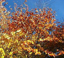 Sunlight on Russet Leaves by BlueMoonRose