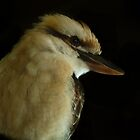Laughing Kookaburra by Paraplu Photography