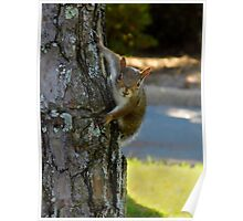 The Marriott Hotel Squirrel Poster