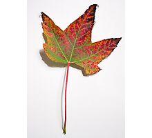 Burning Leaf Photographic Print