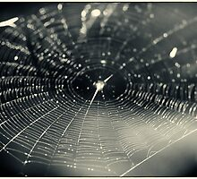 Web of Light - Araneidae Cycles conic Spider Web by MotherNature