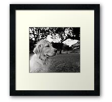 Dogs with game face on .37 Framed Print
