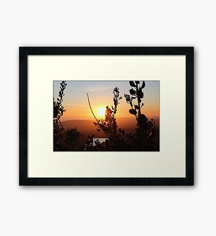Brush at Dawn Framed Print