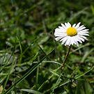 Springtime glory by davidprentice