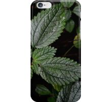 Footpath Leaves iPhone Case/Skin