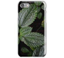 Footpath Leaves iPhone Case/Skin