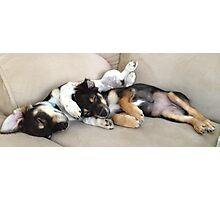 Snuggle Puppies Photographic Print