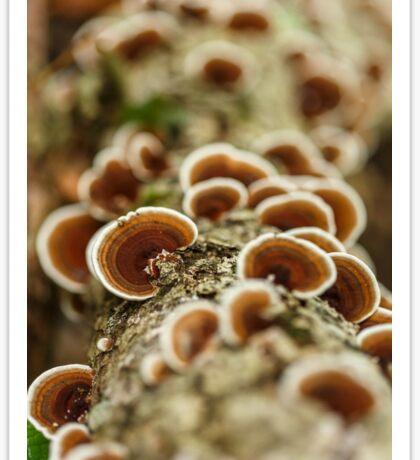 Parasite mushrooms on tree Sticker