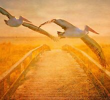 Flight Of The Pelicans by wallarooimages