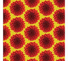 Beautiful yellow background Dahlia flower design Photographic Print