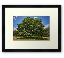 Centennial oak tree Framed Print
