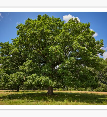 Centennial oak tree Sticker