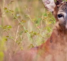 Roebuck in a grass field Sticker
