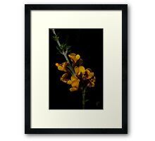Spring Breakfast Framed Print