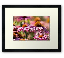 Gerber flowers in a garden Framed Print