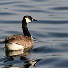 Canada Goose in Grenadier Pond, Toronto, Ontario, Canada by Gerda Grice