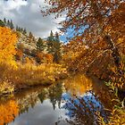 Susan River Autumn Reflections by James Eddy