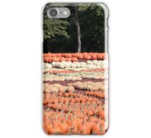 Pumpkins 23 iPhone Case/Skin