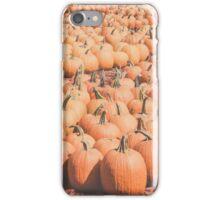 Pumpkins 24 iPhone Case/Skin