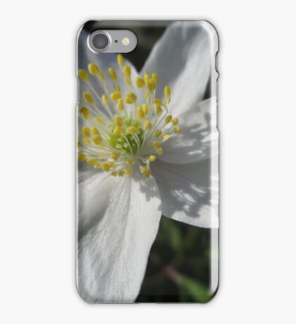 Single White Wood Anemone iPhone Case/Skin