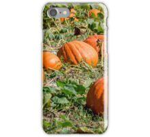 Pumpkins 26 iPhone Case/Skin