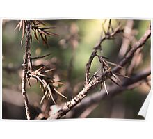 Macro Branches Poster