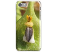 King Sunflower Seed iPhone Case/Skin