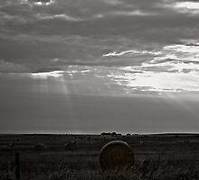 Shining by Tam Edey