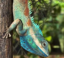 Indo-Chinese Forest Lizard by Bo Christensen