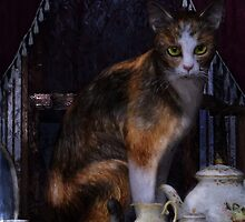 Milk no Sugar Calico Cat by Shanina Conway