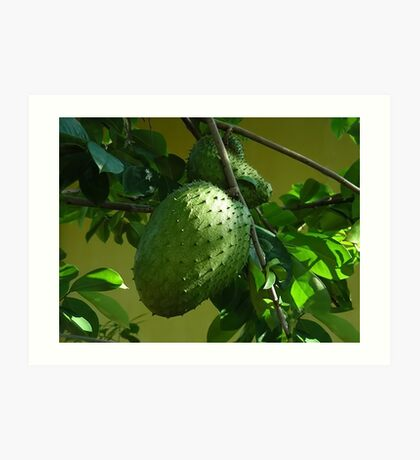 GUYABANO, THE SOURSOP FRUIT - Cancer Remedy- PICTURE/CARD Art Print