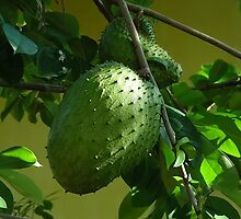 GUYABANO, THE SOURSOP FRUIT - Cancer Remedy- PICTURE/CARD by ✿✿ Bonita ✿✿ ђєℓℓσ