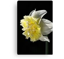 Daffodil Delight Canvas Print