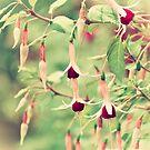 Beautiful Fuchsia Flowers by Vicki Field