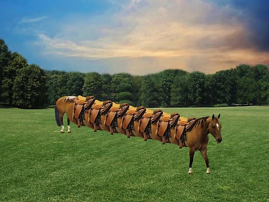 (????)  HORSE LIMO RIDES SEVEN LETS RIDE LOL (????) by ✿✿ Bonita ✿✿ ђєℓℓσ