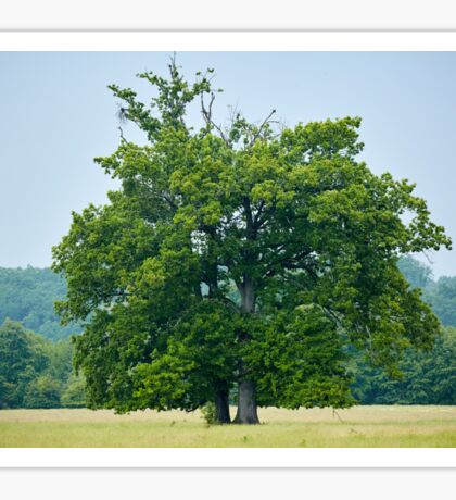 Big old oak tree on a meadow Sticker