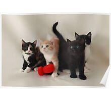 fluffy kittens Poster
