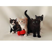 fluffy kittens Photographic Print