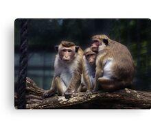 monkey, monkey family Canvas Print