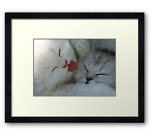 cute white kittens Framed Print