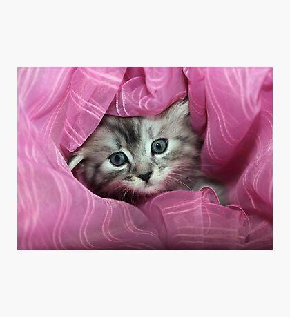 cute grey kitten Photographic Print