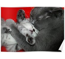 cat and kitten Poster