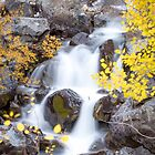 Fall at the falls on the Uncompahgre river by Ken Fleming