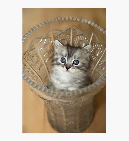 cute grey kitten in vase Photographic Print