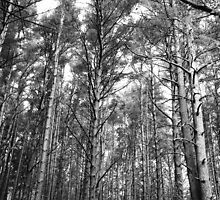 Nature in black and white by Anne Staub
