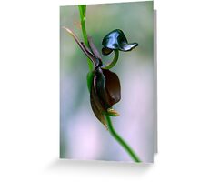 Flying Duck Orchid - Caleana major Greeting Card